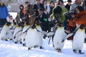 旭山動物園パンフレット